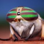 Böcekleri Bu Kadar Yakından Gördünüz mü?