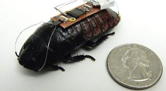 biobot-teknocinnet